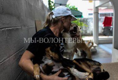 Женщина посвятила свою жизнь спасению бездомных собак