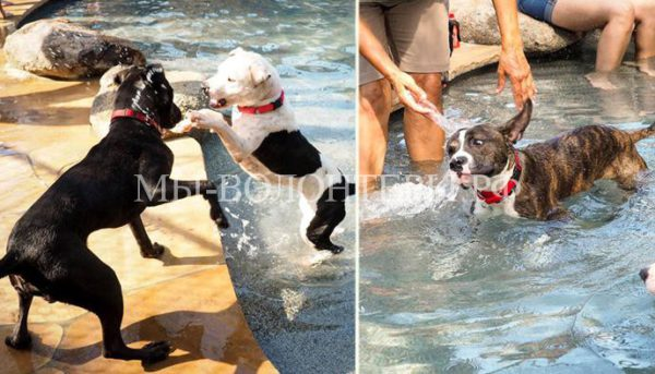 Для собак из приюта устроили купание в бассейне
