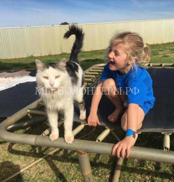 Потерявшегося домашнего кота нашли через год в 100 км от дома