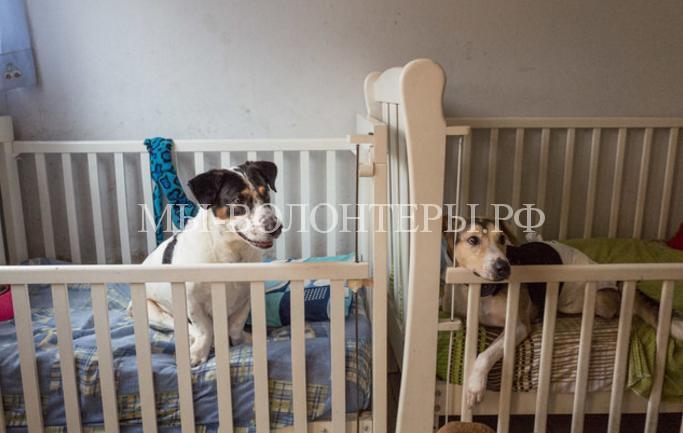 Небольшой приют, специализирующийся на уходе за собаками-инвалидами