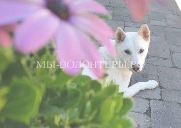 Спасение больной собаки со свалки