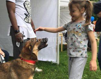 10 июня состоялся первый городской фестиваль «Собаки в городе»