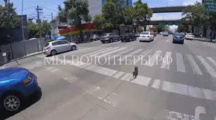 Велосипедистка пыталась спасти убежавшую от хозяина собаку