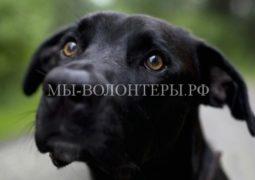 В Госдуме предложили ужесточить наказание за жестокое обращение с животными