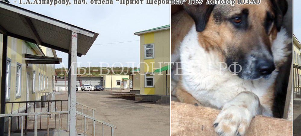 Благодарность Азнаурову Г.А. (нач. отдела), А.А.Коринецкому (ловец), и рабочим приюта Щербинка
