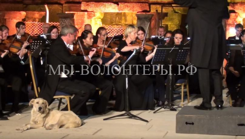 Бездомный пес вышел на сцену во время выступлении Венского симфонического оркестра