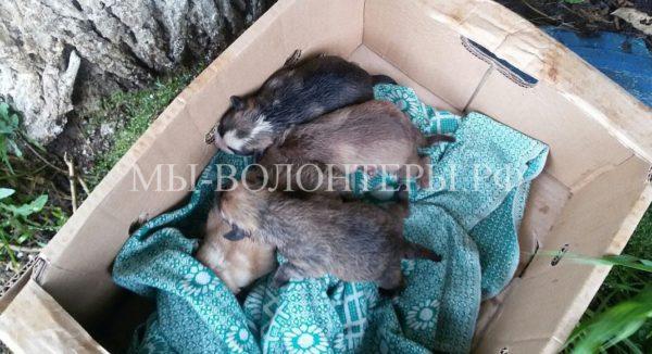 Житель Омска нырнул в сточную канаву под проливным дождем, чтобы спасти тонущих щенков