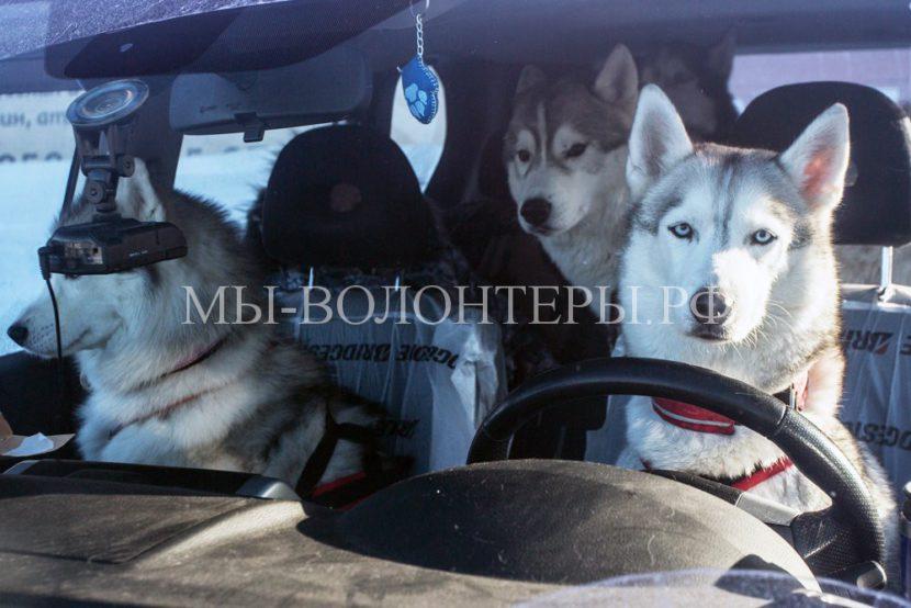 Как сделать поездку с собакой на машине безопасной и приятной