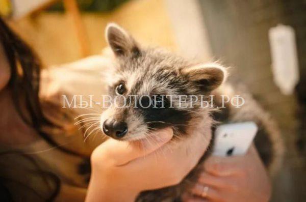 Спасение животных из заброшенного контактного зоопарка