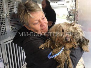 Спасение собаки Камо