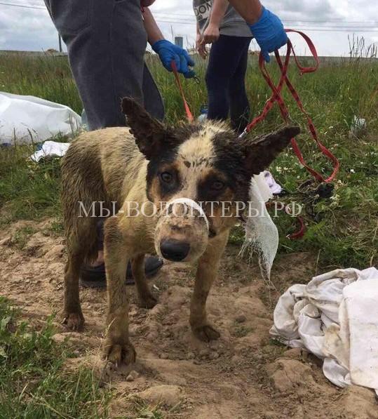 Спасение щенков из скотомогильника