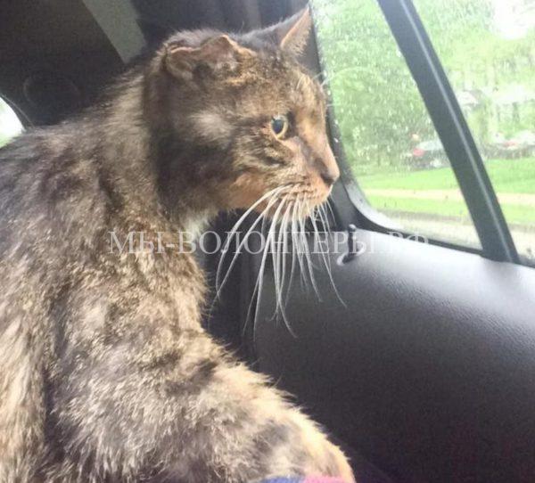 15-летнего бездомного кота забрал в семью ветврач
