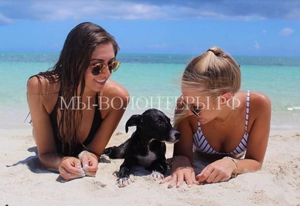 Центр по спасению собак становится одной из самых посещаемых достопримечательностей на Карибах