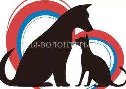 Принятие законопроекта «Об ответственном обращении с животными» снова перенесли