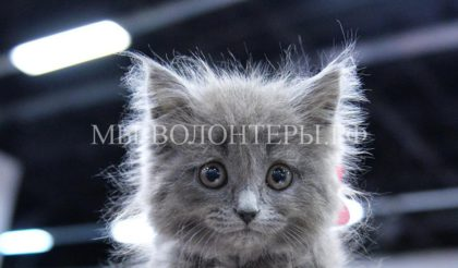 В Ванкувере принято решение о запрете продажи кошек, собак и кроликов в зоомагазинах