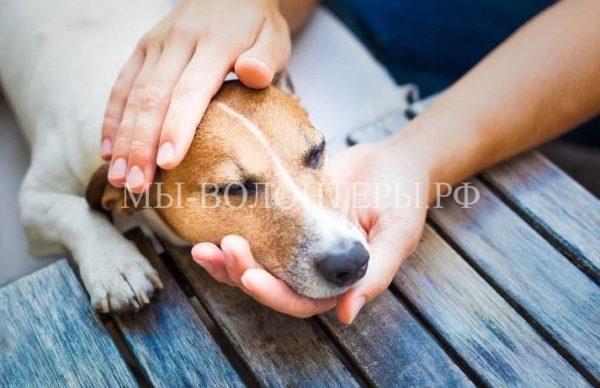 Лекарство против вируса чумки собак разработано учеными Томского университета