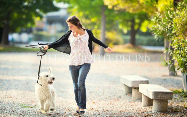 Собака в доме — секрет долгой и здоровой жизни человека