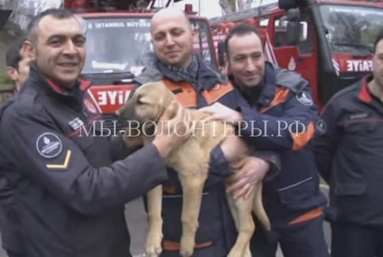 Спасение щенка из 70-метровой шахты