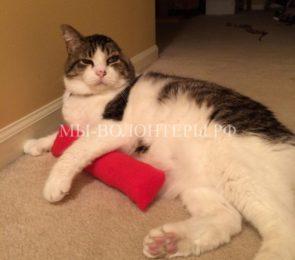 Кот выжил после тяжелейшей травмы, поправился и обрел семью