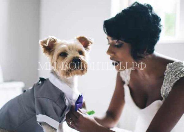 Молодожены сделали своего любимого питомца участником свадебной церемонии