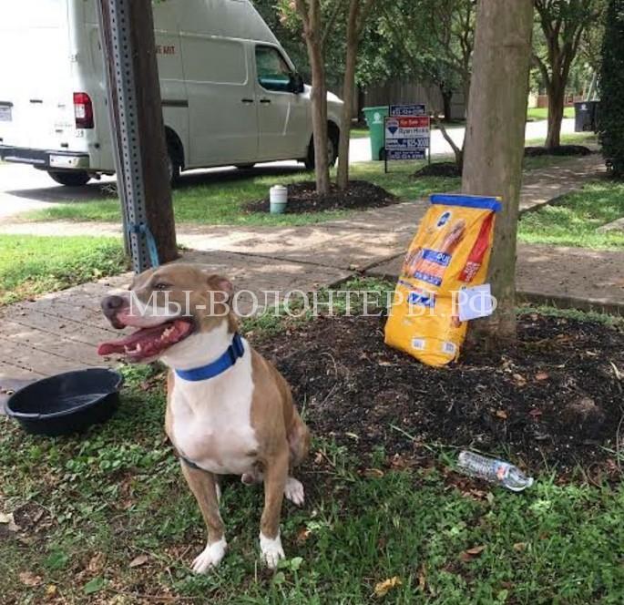 Брошенная собака, которую прежние хозяева привязали к остановке, обрела новый дом