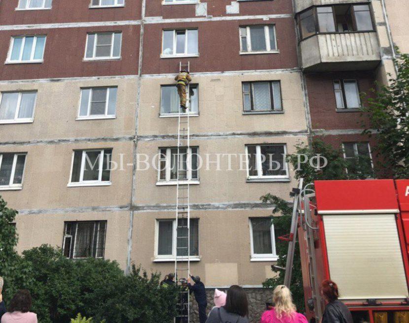 Пожарные спасли собаку, с застрявшей в окне лапой