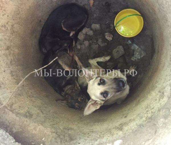 В Севастополе спасли трех истощенных собак, брошенных в колодец