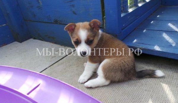 Спасение щенка, выброшенного в коробке у дороги