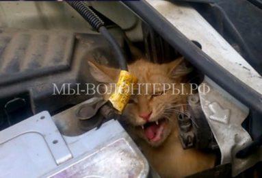 Спасение кота из-под капота автомобиля