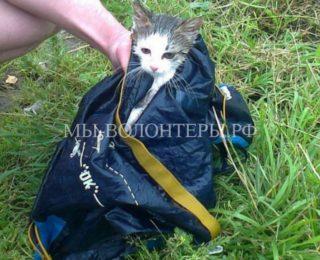 Спасение котенка с необитаемого острова в Черном озере