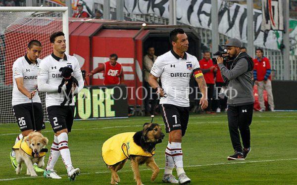 Чилийские футболисты вышли на поле перед матчем с собаками из приюта
