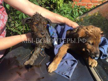 В Калининграде студенты спасают щенков из лужи с мазутом