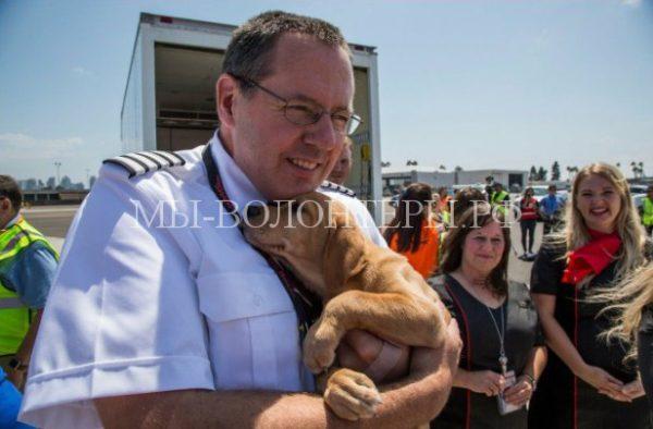 Авиакомпания помогла спасти бездомных животных, пострадавших от урагана «Харви»