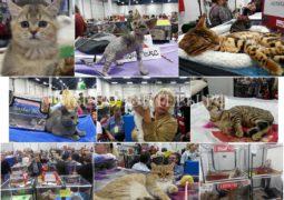 23-24 сентября 2017 - выставка  кошек