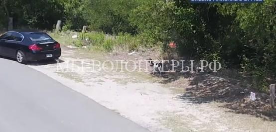 Человека, который высадил из авто собаку и уехал, нашли по видео и задержали