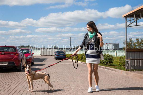 Как живет щенок, спасенный из скотомогильника