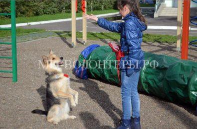 В Красноярской школе учащиеся могут приводить своих собак на занятия по кинологии