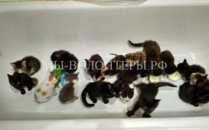 Житель Екатеринбурга спас 21 котенка