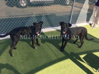 Спасение двух собак, замурованных в трубе