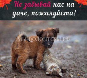 В Карелии началась акция по спасению животных, брошенных на дачах