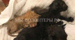 Спасение котят во время урагана и поиски их мамы