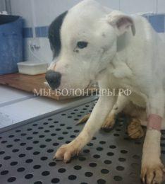 Спасение и пристройство Патча, собаки с особенностями пищеварения