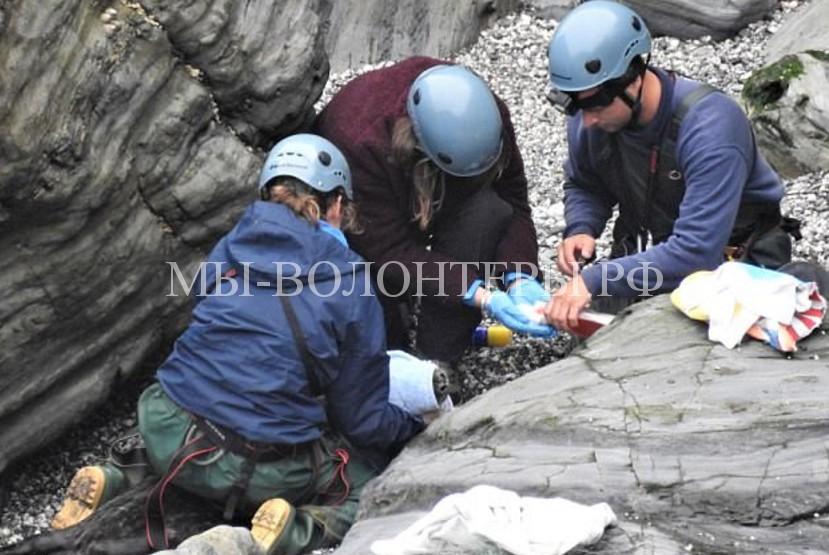 Зоозащитники помогли тюленю, которому рыболовная сетка повредила шею