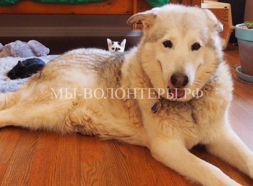 Четыре котенка, взятых из приюта, сделали счастливой большую собаку