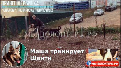 Слалом, мостик на площадке для выгула и тренировки собак приюта Щербинка