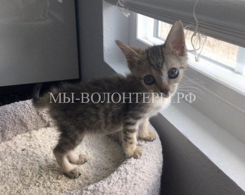 Крошечный котенок, единственный из десяти собратьев, выжил после неизлечимой инфекции