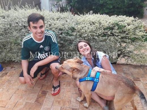 Во время свадебной церемонии к молодоженам пришла бездомная собака. Они забрали ее в семью