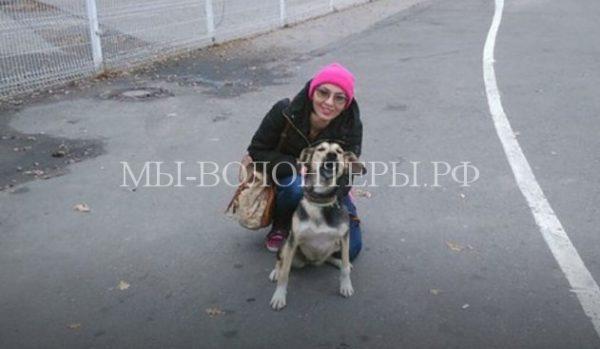 Собаку, потерявшуюся в аэропорту Домодедово, вернули хозяйке через 10 дней
