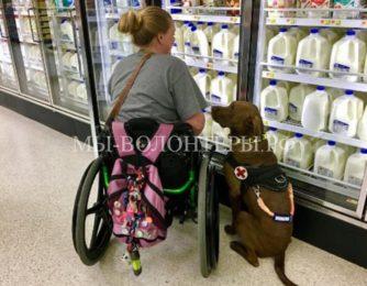 Верный и надежный пес Кольт помогает своей хозяйке-инвалиду