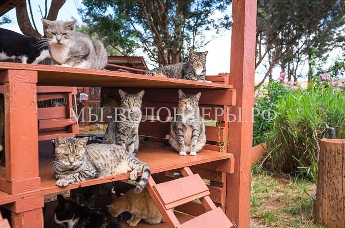 Приют для бездомных кошек на Гавайских островах